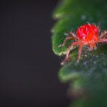 spindemider